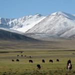 China cerca a sus nómades, y una vida antigua se marchita